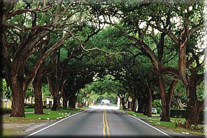 Coral Way Miami